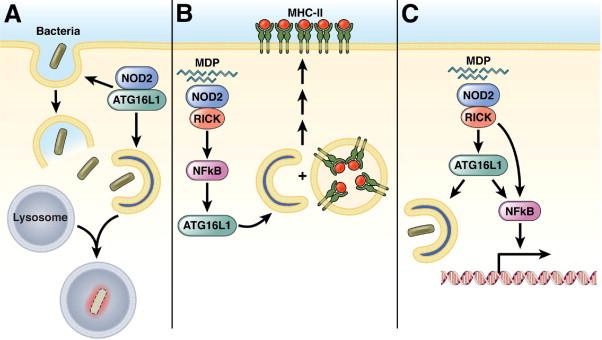 IBD & Genes: A confusing relationship (2/6)